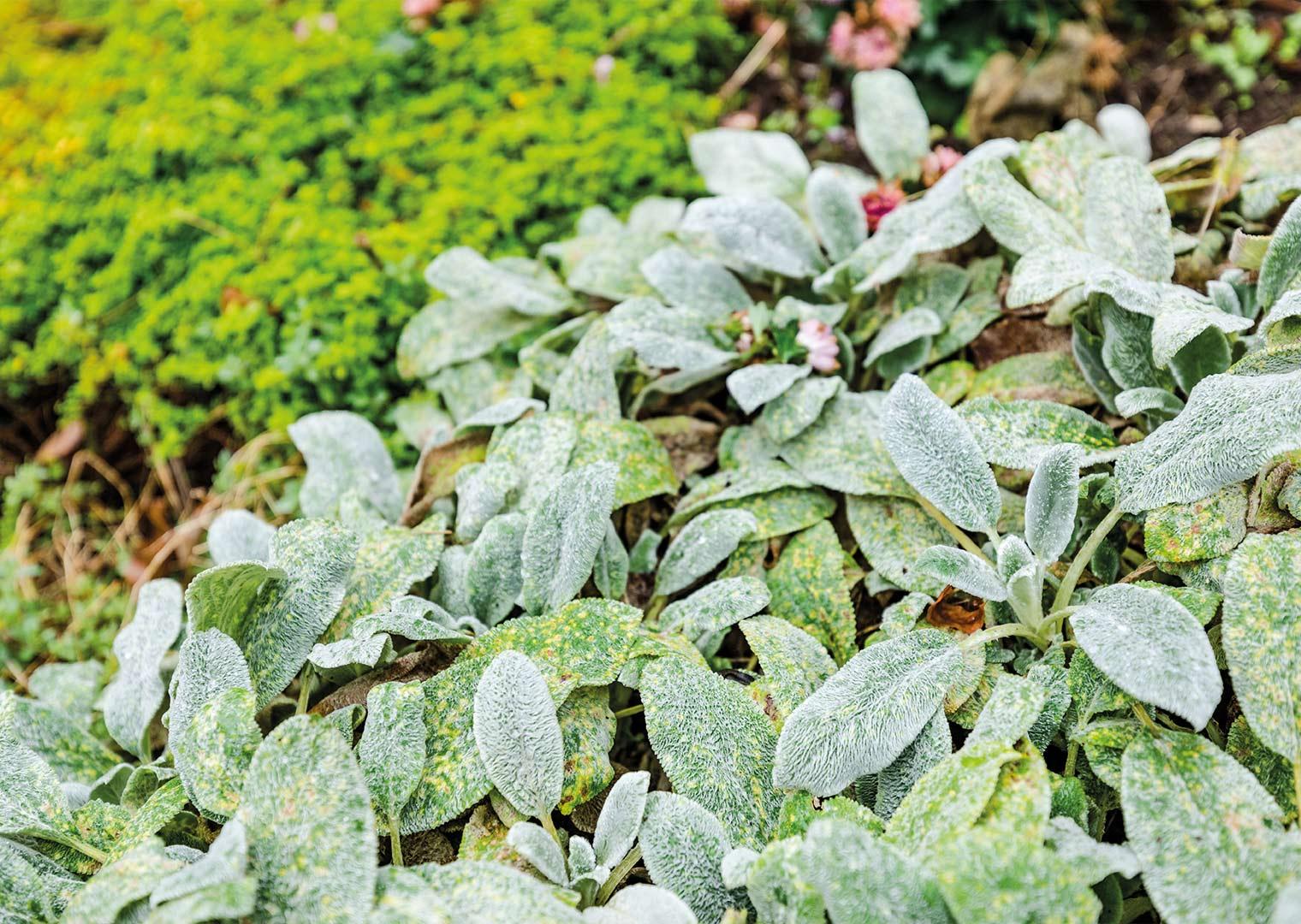 Link zur Bilddatei: menke_galabau_bochum_galeriebild_gartengestaltung_blumenbeete_bepflanzung
