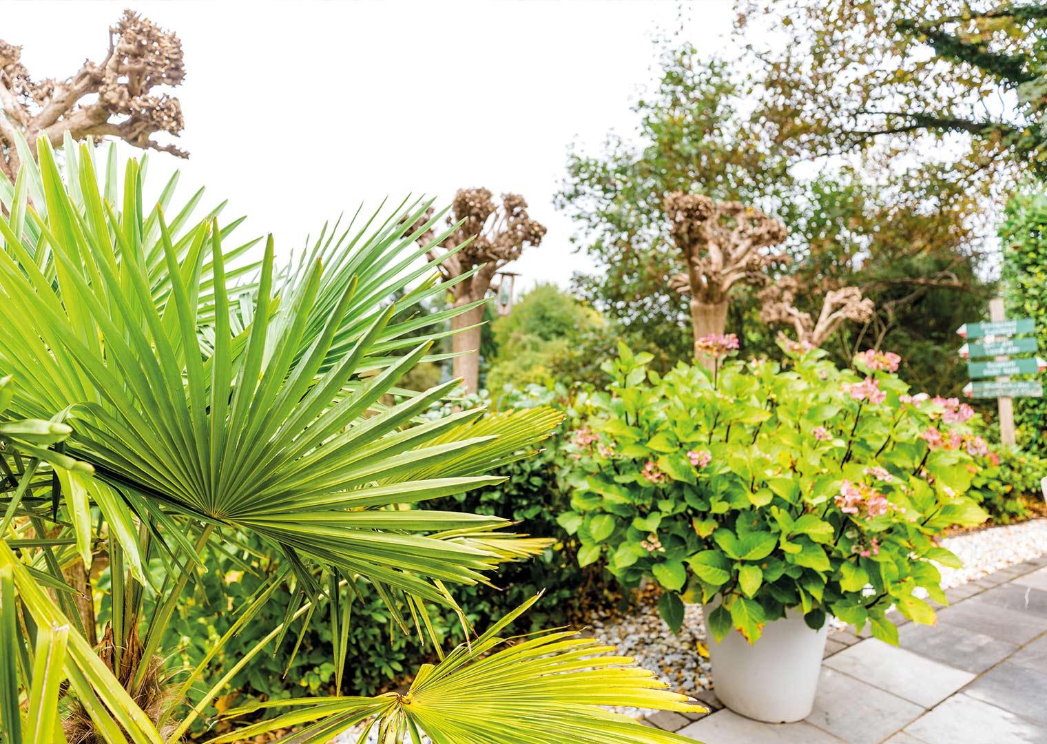 Link zur Bilddatei: menke_galabau_bochum_galeriebild_gartengestaltung_terrasse_palme