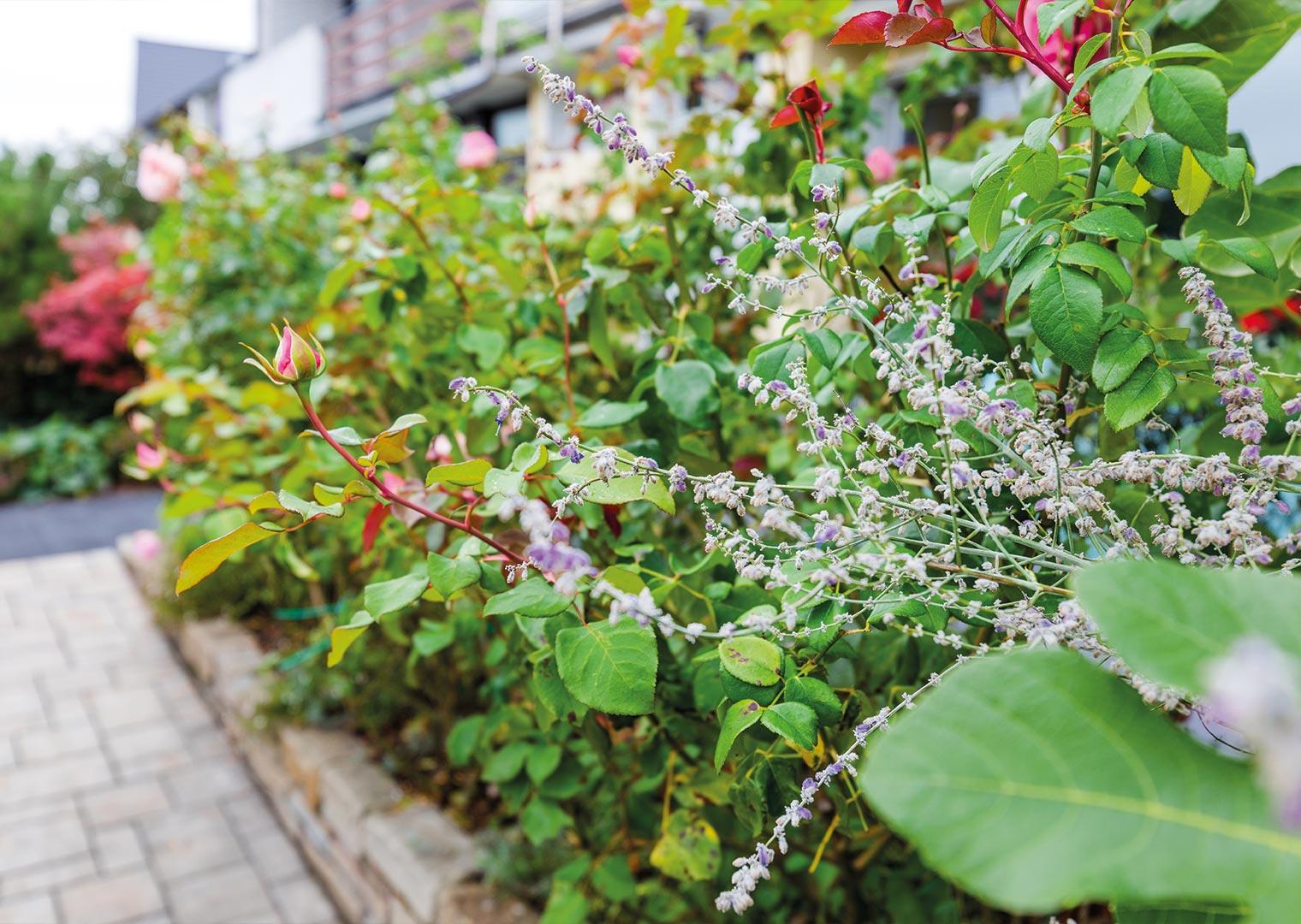 Link zur Bilddatei: menke_galabau_bochum_galeriebild_gartenpflege_vegetationsarbeiten_bepflanzung