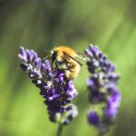 Bienenfreundliche Bepflanzung im Sommer
